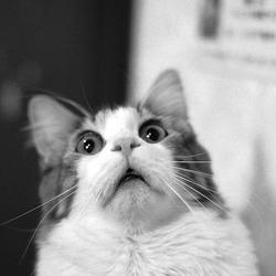 chat-peureux-solutions-06