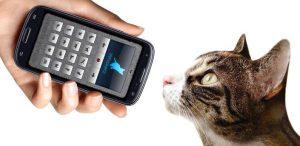Human-to-Cat-Translator-app